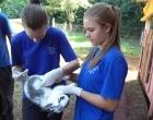 Identificación y sanitación de conejos
